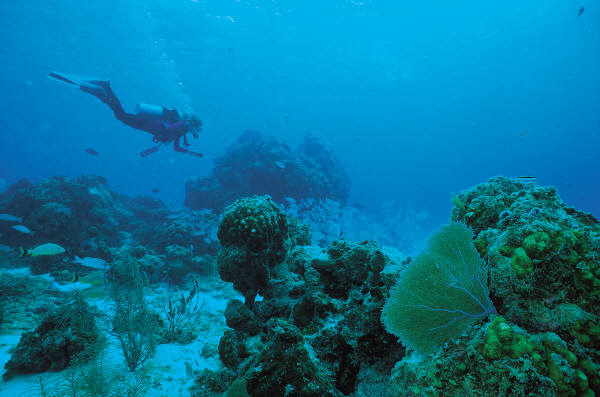 Top 10 countries for a scuba-diving holiday