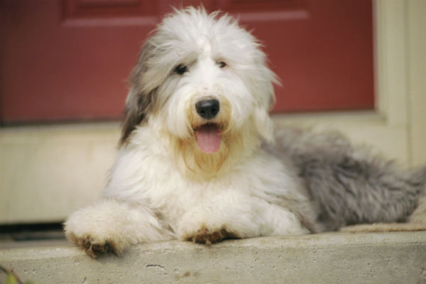 Grooming and Skin Conditions, What Dog Groomers Should Know