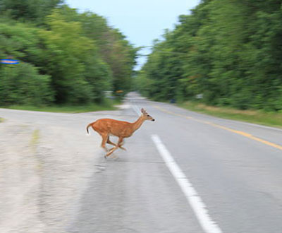 How to Prevent and Respond to Deer Accidents
